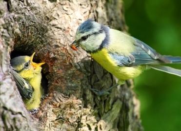 oiseaux,ville,urbanisme,pollution,environnement