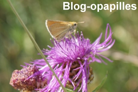 papillon-nectar.jpg