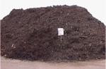 sapins-compost03.jpg