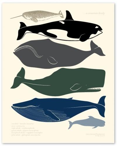 océans,biodiversité,population,pollution,pêche,développement durable,écosystème,cétacés,co2