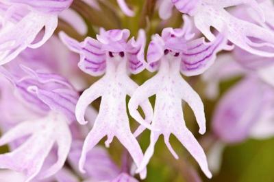 fleurs,nature,naturalistes,orchidées,arts