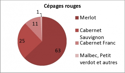 vigne,viticulture,aquitaine,bordeaux,vins,vin bio,cépage,gastronomie,réchauffement climatique
