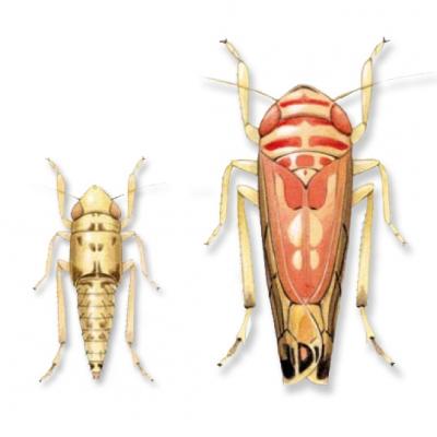 insecticides,vigne,viticulture,environnement,vin bio,santé,insectes