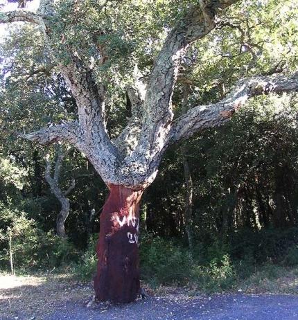 bois,vin,vin bio,environnement,foret,recyclage,pollution