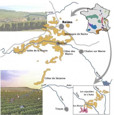 coopérative,vins,économie,commerce équitable,consommer autrement,viticulture,vigne