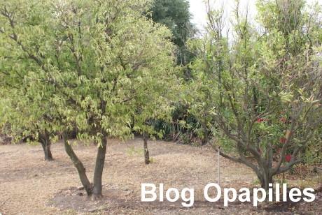 secheresse-arbre.jpg