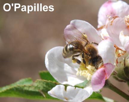 abeille-rn.png